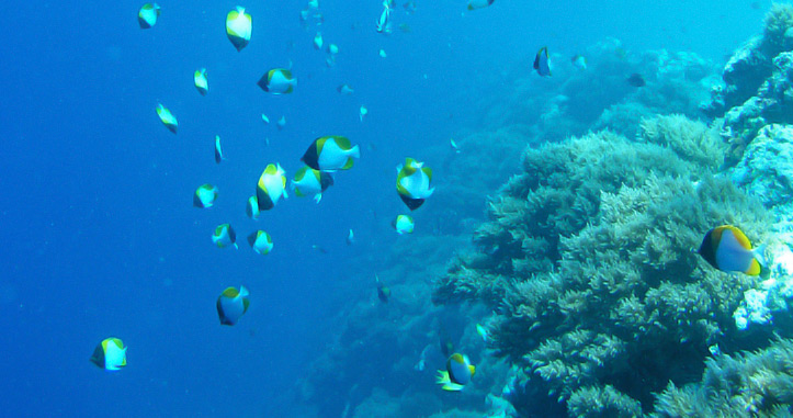 Experience Diving in Palau